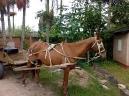 Cavalo e carroça