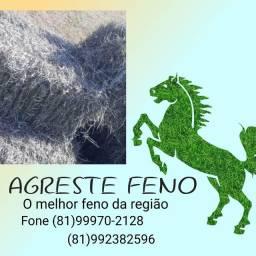 AGRESTE FENO O MELHOR  DA REGIÃO