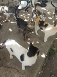 Doação de Gatos criados soltos