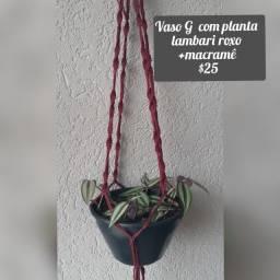 Vasos com folhagens pendentes+suporte em macramê para pendurar a partir de $20