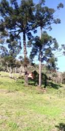 Chácara de 8 hectares com 2 casa e parreiral, em  Monte Bérico.
