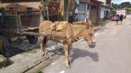 Vende se esse burro com carrosa