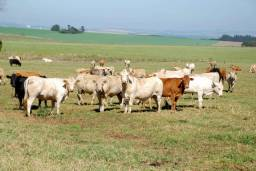 Rural Gado