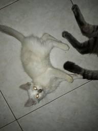 Filhotes de Gatos para adoção! Faço entrega!