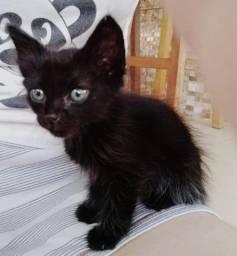 Adoção gata preta