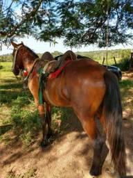 Cavalo muito bom e experto