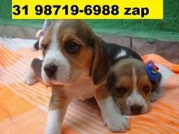 Canil Filhotes Pet Premium Cães BH Beagle Lhasa Maltês Shihtzu Poodle Yorkshire