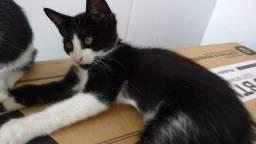 Lindos gatinhos p adoção  *