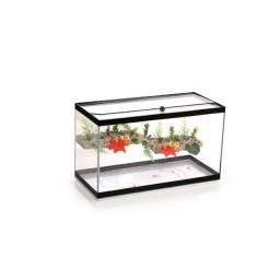 Terráio aquário