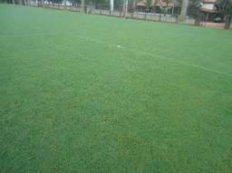 Grama Bermuda campo futebol, concregrama, mudas em Goiânia