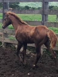Égua boa e barata