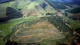 Fazenda 25 Alqueires 110.000 Pés de café produzindo