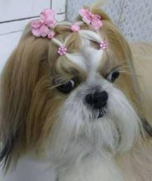 Parceria para Pet Shop