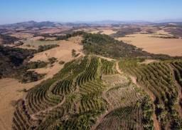Título do anúncio: Fazenda de Café a venda em Minas Gerais-Carmo de Minas melhor Região para Café