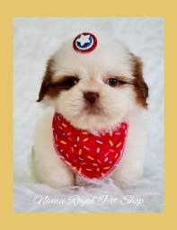 Título do anúncio: Shih tzu macho fofo de qualidade / fotos reais - Namu Royal pet