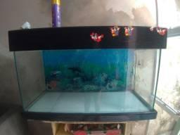 Venda de aquários