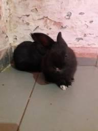 Vende-se filhotinhos de coelhos lindos e fofinho