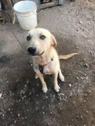 Estou doando esse cachorro raça indefinida achei na rua e não posso ficar com ele