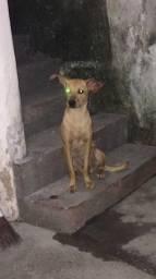 Linda cadelinha estava na rua