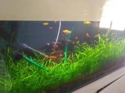 Aquário plantado de 600 litros (2 metros)