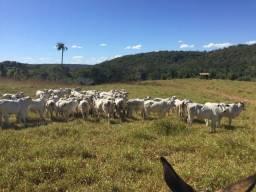 Troca por uma fazenda Próximo a Goiânia Fazenda 133 Alqueires ( 643 ha ) Barrolândia-TO