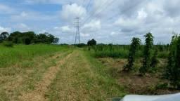 Terrenos de 20ha a 60ha - Igarassú