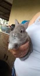 Vendo filhotes de coelho com 40 dias