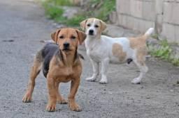 Cachorro mestiço pra doação