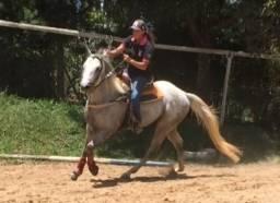 Cavalo QM linhagem Corrrida Sem Registro