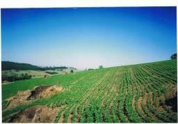 Excelente Sítio 15 alq.terra vermelha,2 nascentes,200pés macadamias.granja 1000 cab.coelho