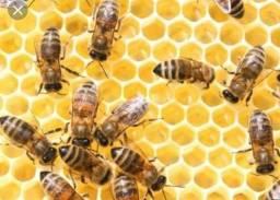Remoção de todos tipos de abelhas
