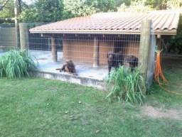 Sítio à venda em Vila nova, Porto alegre cod:LI161