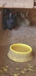 Vendo 5 coelhos