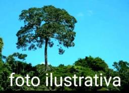 Fazenda com 54.000 hectares no amazonas, em Borba