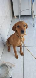 Cachorra para doação