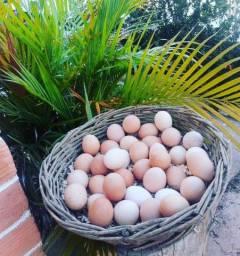 Ovos de Capoeira