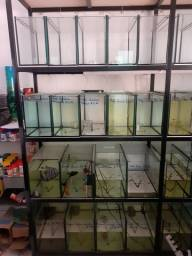 Bateria de aquários, expositora de peixes