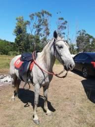 Vendo Cavalo bom para lida com gado