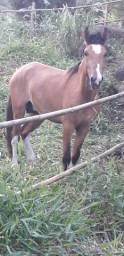 Vendo cavalo 3 anos e 7 meses