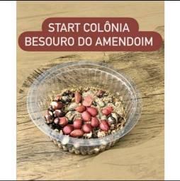Start Besouro Amendoim (120 Unidades)