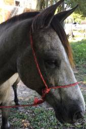 Vendo cavalo manso