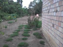 Terreno barato em Belterra