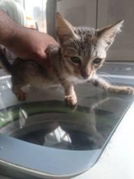 Doa se filhotes gatos cinza