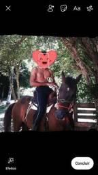 Égua à venda
