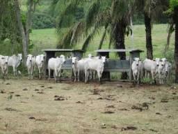 Fazenda em Corumbá-MS com 4.247 ha aptidão para pecuária de corte e ecoturismo