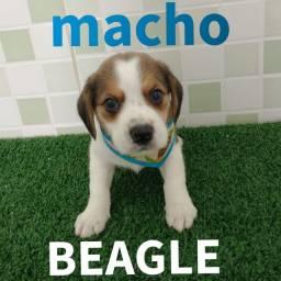 Lindo presente pro dia das crianças  beagle