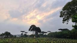 Terreno túmulo cemitério Jardim da saudade