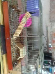 Gaiola já com um filhote de Hamster anão russo