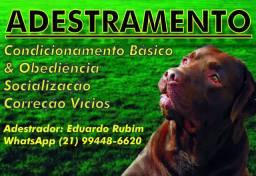 Adestramento de Cães(Todas as raças)