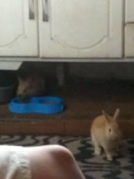 Doa-se coelhinhos